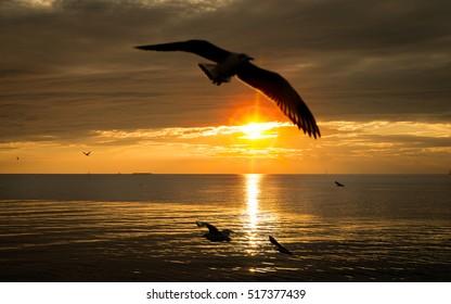 Seagull bird flying on sea at Bang pu, Samutprakan, Thailand.