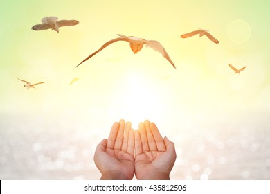 seagull  bird flying out of two hand and freedom concept and freedom background and international day of peace 2016