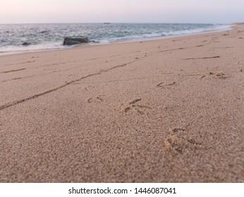 Seagull or bird footprints in the sand on beach