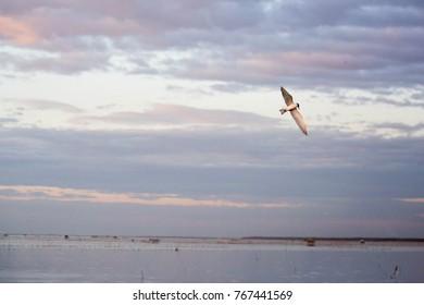 Seagull Bird on sky sea and sunlight flying