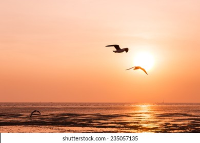 seagull birds flying in sunset over the sea