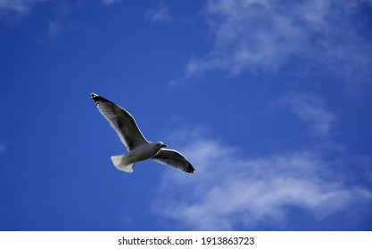 The seagull in the blue sky with light clouds