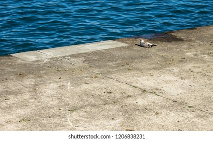 Seagull by the Shore