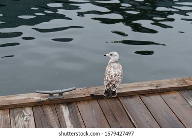 Seagull chilling on the dock