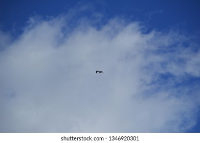 seagull in cloudy sky