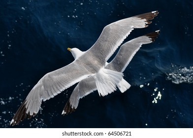 seagull and dark blue