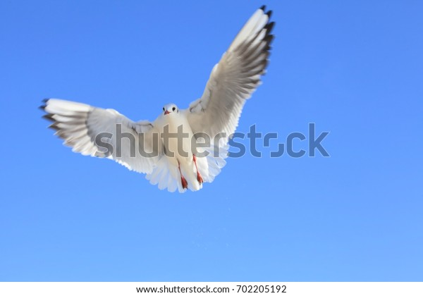 A seagull and a dynamic wing with a blue sky background