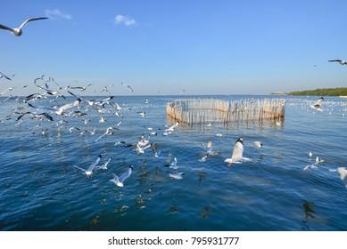 A lot of seagull evacuate at Bang pu recreation center Samut prakan, Thailand