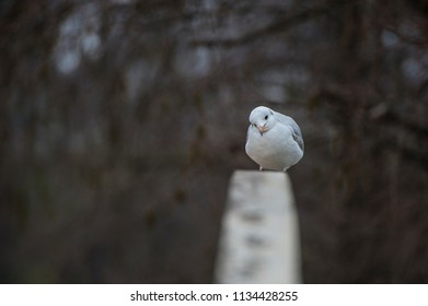 Seagull face/Seagull sat on a railing all huddled up and curious under the winter cold.