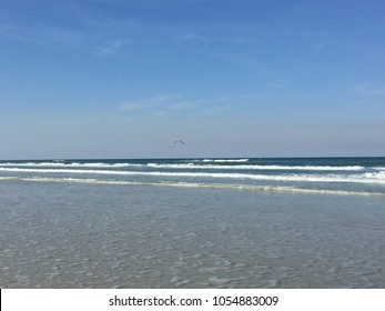Seagull Far On the Horizon of New Smyrna Beach, Florida USA
