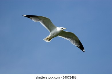 The seagull flies against the blue sky.