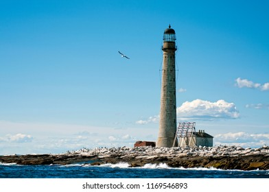 Seagull flies by the stone tower of Boon Island lighthouse, the tallest beacon in New England on a summer day. The lighthouse is located on a tiny rock island.