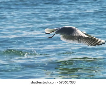 The seagull flies fast over the surface of the ocean