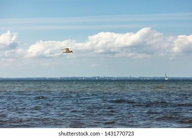 a seagull flies near the beach over the sea