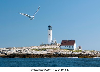 Seagull flies near White Island (Isles of Shoals) lighthouse on sunny day in autumn in New Hampshire. It is a popular island attraction for tourists.