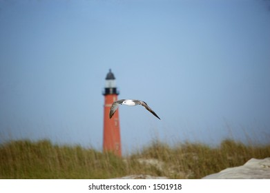 A seagull flies past the Ponce De Leon Inlet Lighthouse