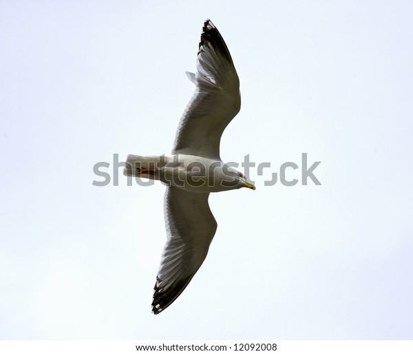 The seagull flies in the sky