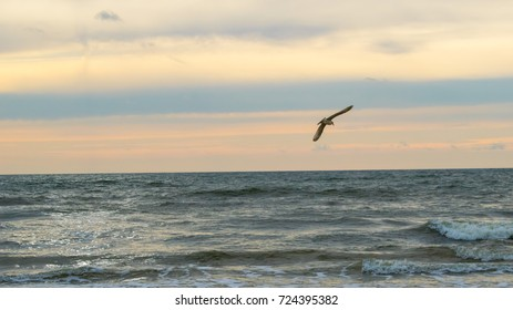 Seagull in flight above Baltic sea
