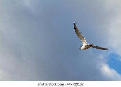 Seagull in flight against cloud