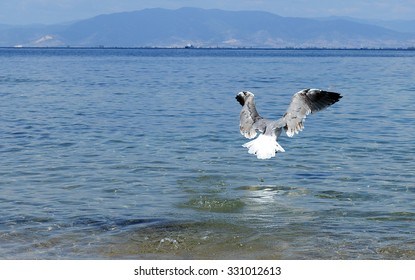 Seagull in flight over blue sea in the summer time