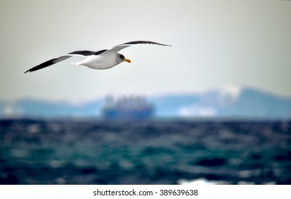 seagull in flight over the sea on a background of a cargo ship