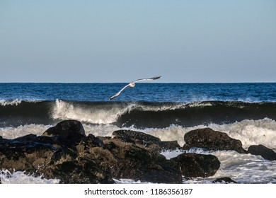 A seagull in flight over this jetty in Avon by the Sea along the New Jersey coastline.