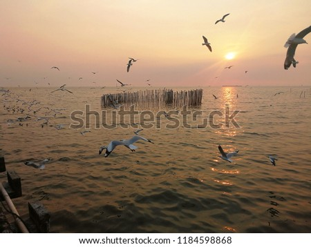 Seagull Fly Back Nest Sunset Stock Photo (Edit Now) 1184598868