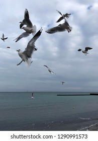the seagull flying above the sea