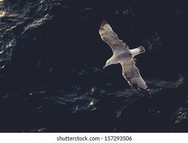 Seagull flying above the water. Tinted photo, low contrast
