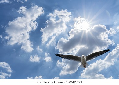 Seagull flying against blue cloudy sky with brilliant sun.