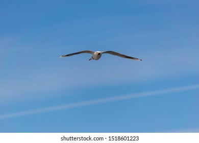 Seagull flying away against blue sky