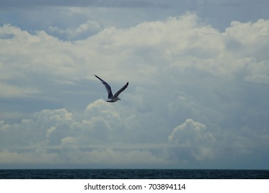Seagull Flying at Beach in the Outer Banks of North Carolina