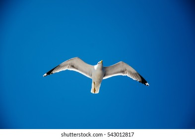 seagull flying in the beautiful blue sky