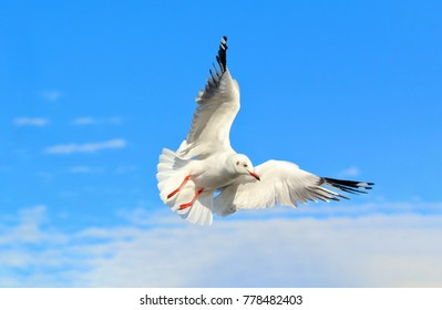Seagull flying in beautiful sky.