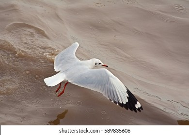 a seagull flying beyond the sea