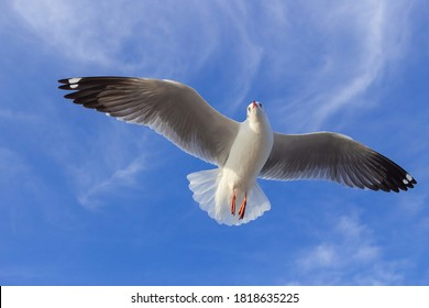 Seagull is flying in the blue sky. It is a seabird, usually grey and white. It takes live food (crabs and small fish).