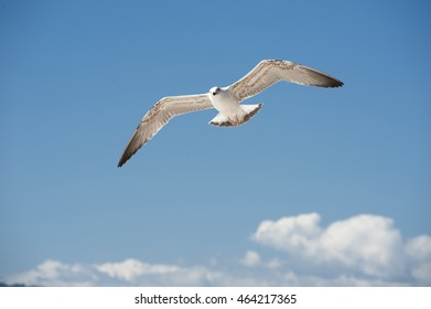 seagull flying in the blue sky at summertime