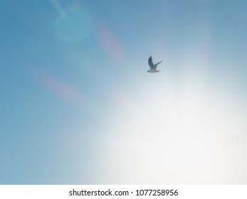 Seagull flying in the blue sky with the sun light.