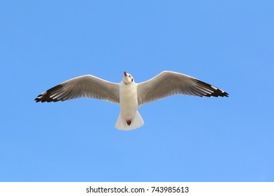 seagull flying in clear blue sky.
