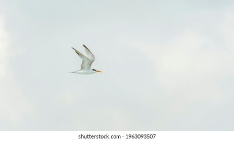 seagull flying in the clear sky
