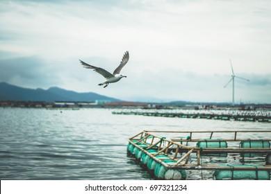 Seagull flying / fish farms on the ocean / near the coastline