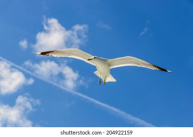 A seagull is flying with his wings opened