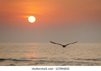 Seagull flying into the sun