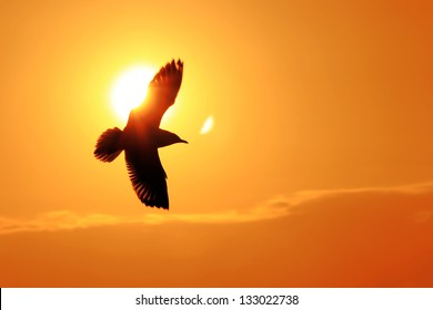 Seagull Flying Into the Sunset at Bangpu, Thailand