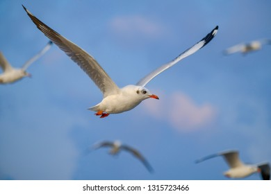 Seagull flying and nature background