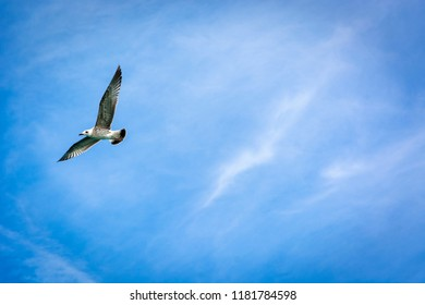 Seagull flying on blue sky with copy space