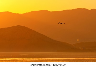 seagull flying on evening mountains background