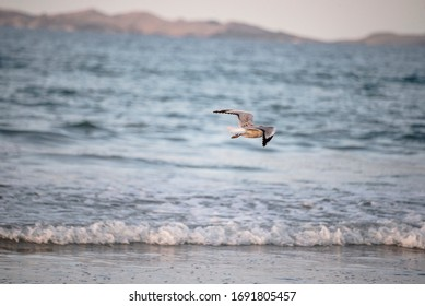 Seagull flying on sea surface background