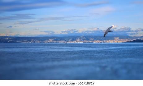 seagull flying over the Adriatic Coast in Portoroz, Slovenia