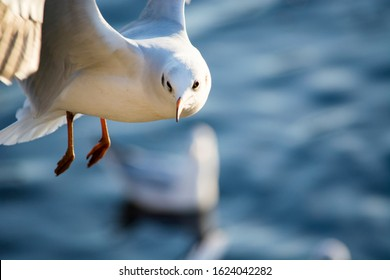 Seagull Flying Over Blue Water